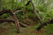 Mark Baugh-Sasaki: Circulation, 2013, steel, found branches, outdoor installation
